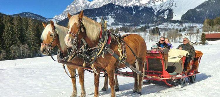 Austria Winter Pferdeschlitten