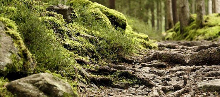Badratzes Wald