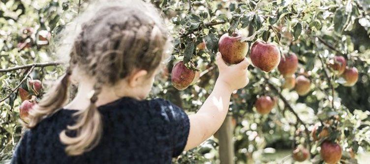 Ballonhotel Kind Pflueckt Apfel