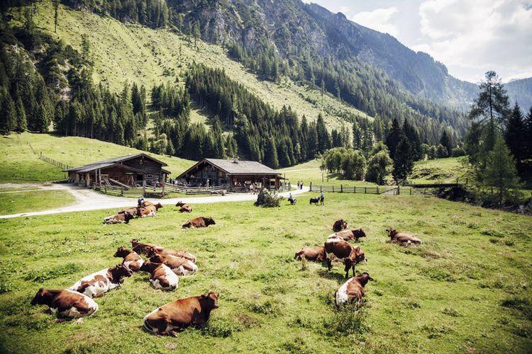 Ber 200 Almen Und Huetten Ferienregion Nationalpark Hohe Tauern 1