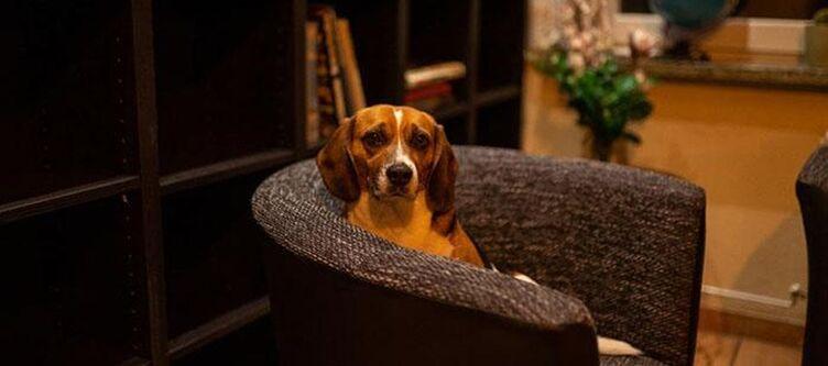 Berghof Lounge Hund