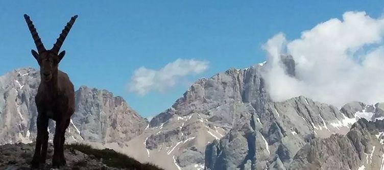 Bianco Panorama