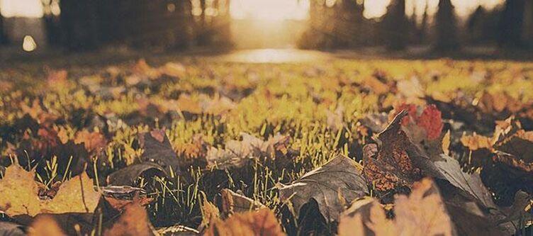 Braun Garten Herbst