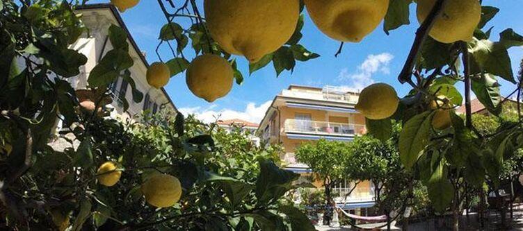Delibera Garten Zitronen