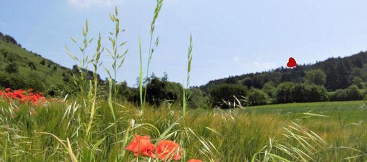 Drei Lilien Natur3