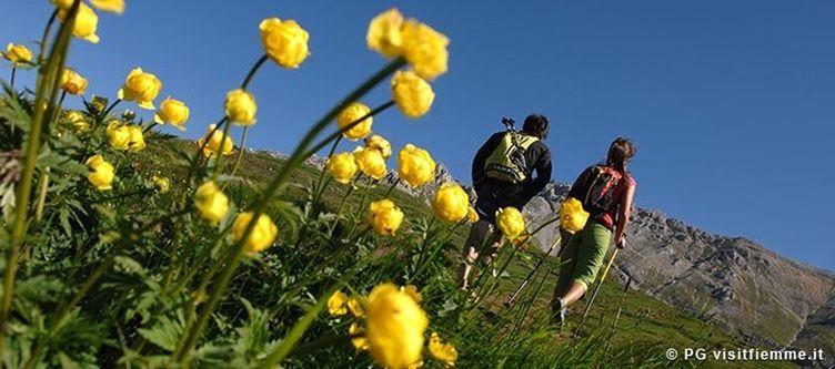 Fiemme Wandern Blumen 1