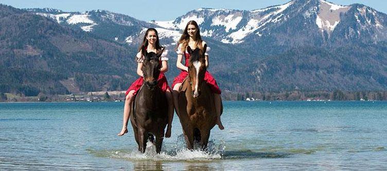 Gutshof Pferde