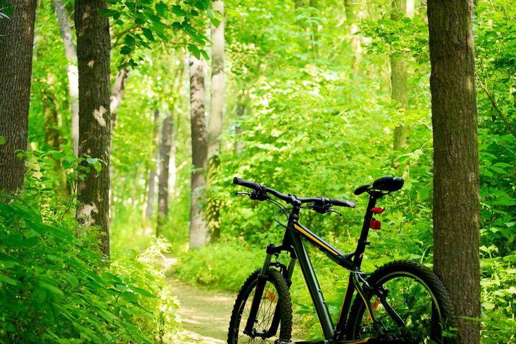 Hotel Witt Bike Trail