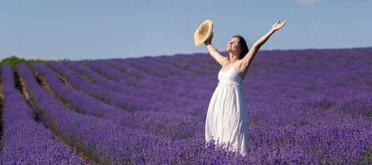 Lavendel Panorama