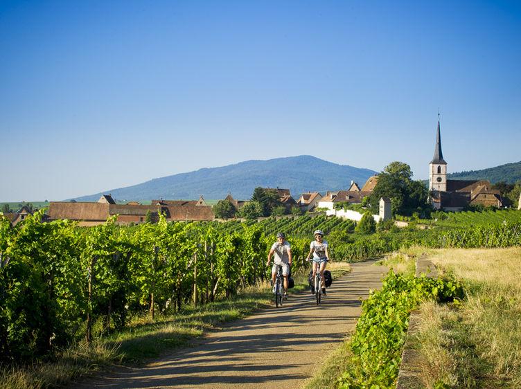 Mittelbergheim Veloroute Du Vignoble D Alsace Eurovelo 5 Adt Bas Rhin Infra Dsc5919 1