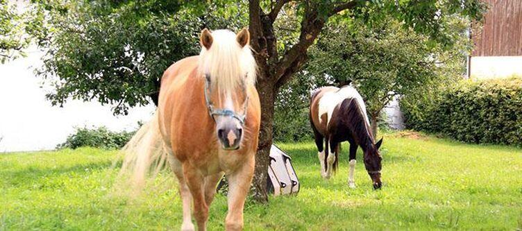 Oberen Wirt Garten Pferde