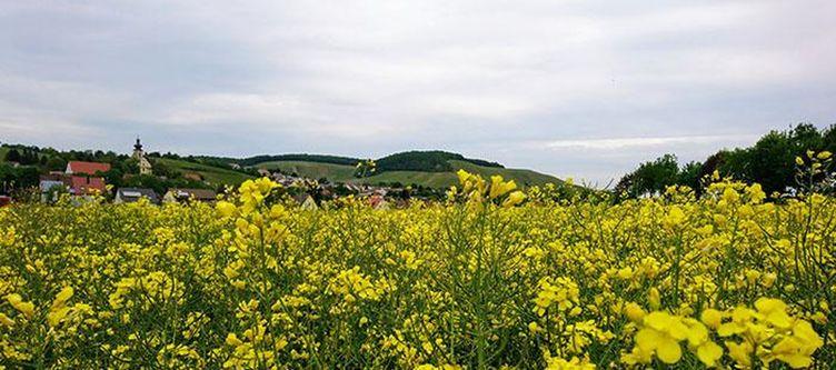 Rebstock Panorama3