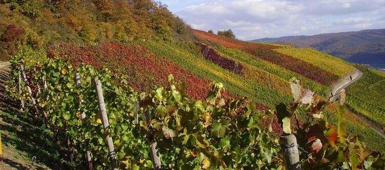 Rheinland Pfalz Mittelrhein Weinberg