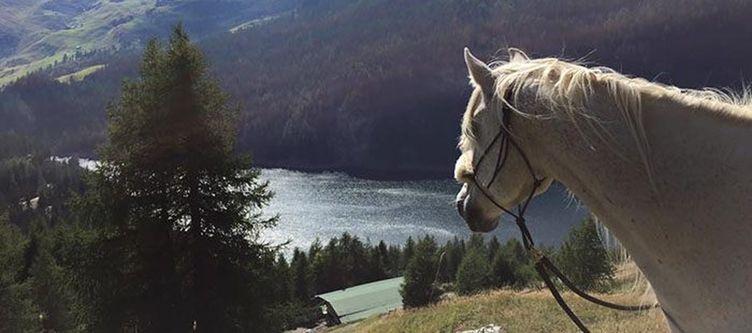 Solaria Pferd Panorama