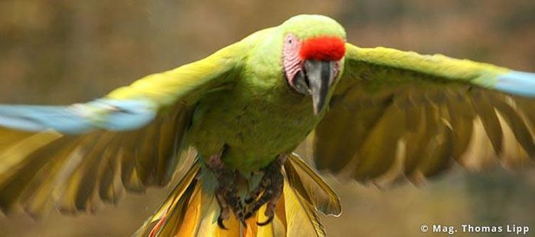 Tierparkherberstein Papagei