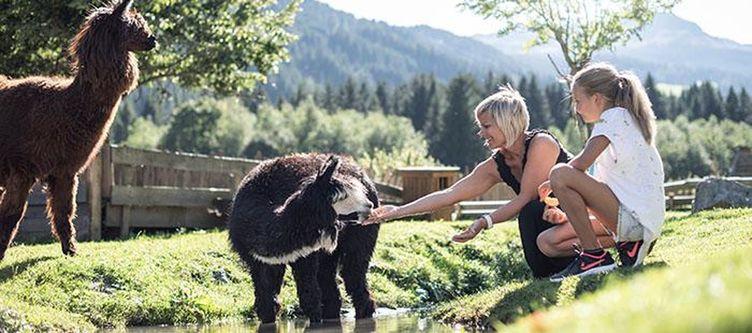 Tyrol Streichelzoo Alpakas