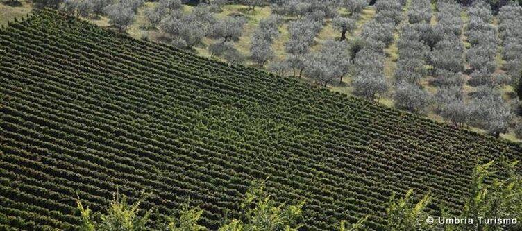 Umbrien Perugia Felder