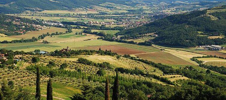 Vega Panorama
