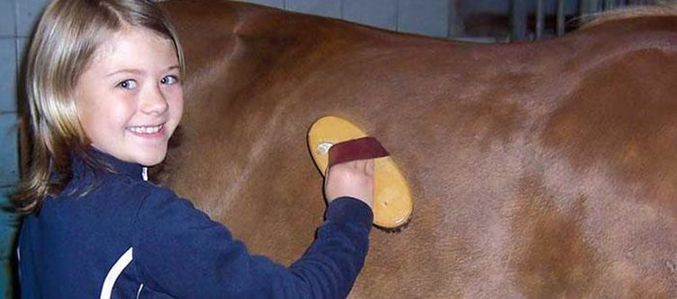 Veitenhof Pferde
